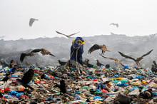 Woman Pulling Garbage By Birds At Junkyard