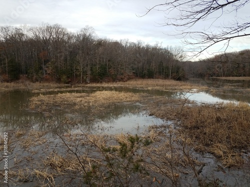 brown grasses and trees in water in winter