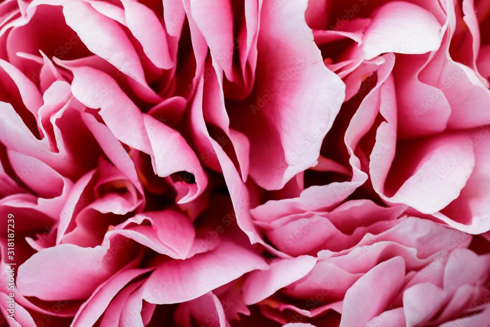 Fototapeta Flakes of lush pink peony flower