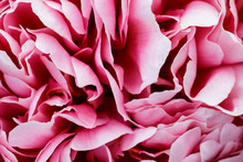 Flakes Of Lush Pink Peony Flower