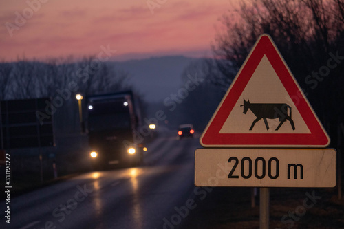 Title: Beware of a Cow Crossing the Road Sign Wallpaper Mural