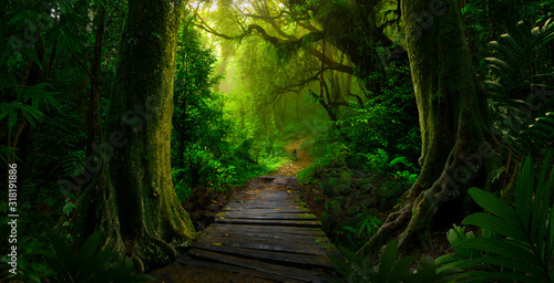 Fototapeta Southeast Asian rainforest with deep jungle obraz