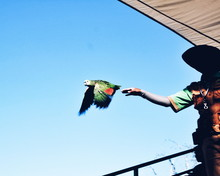 Low Angle View Of Man Touching Parrot Flying Against Clear Sky