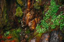 Beautiful Wet Mossy Rocks With Vivid Greenery Close-up. Colorful Nature Background With Mosses On Stones. Picturesque Nature Backdrop With Rich Vegetation On Mossy Cliff. Spring Water Flows Over Rocks