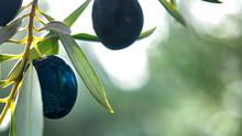 Mediterranen Olives 1