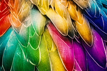 Colorful Bird Plumage. Feather...