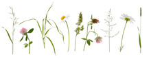 Stems Of Various Meadow Grass ...