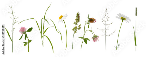 Leinwand Poster Stems of various meadow grass and flowers on white background