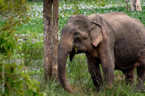 Photo Un pequeño elefante de Sri Lanka