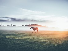 Silhouette Horse On Field Against Sky During Foggy Weather