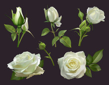Realistic Roses Bouquet. White...