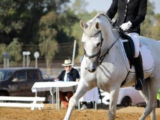 jinete y caballo blanco en evento ecuestre