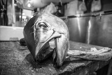 Grey-scale Shot Of A Dead Fish...