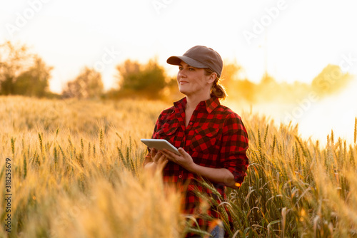Carta da parati A woman farmer examines the field of cereals and sends data to the cloud from the tablet