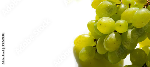 Fototapeta Grapes can be eaten fresh as table grapes or they can be used for making wine, jam, juice, jelly, grape seed extract, raisins, vinegar, and grape seed oil. Grapes are a non-climacteric type of fruit obraz