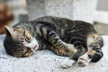 Striped Kitten Cat Sleeping On...