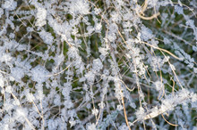 Texture Background, Pattern. Frost On The Sprigs Of Grass. A Deposit Of Small White Ice Crystals Formed On The Ground Or Other Surfaces When The Temperature Falls Below Freezing.