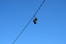 A Pair Of Old Sneakers Hanging On Wires Against A Blue Sky.