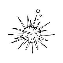 Hand Drawn Sea Urchin Doodle Vector Illustration.