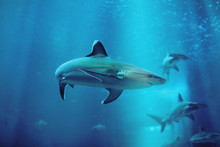 Low Angle View Of Sharks Swimming In Aquarium