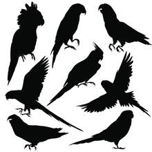 Parrots Silhouettes. Vector Il...