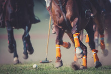 CLOSE-UP OF LOW SECTION OF HORSE AND POLO PLAYER