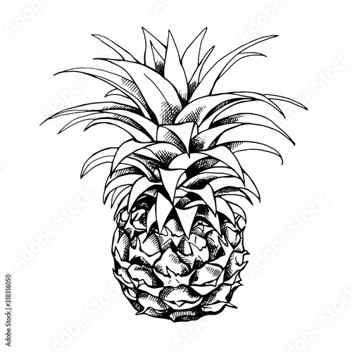 Fototapety, obrazy: Sketch of a pineapple fruit. Vector black and white illustration.
