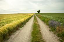A Straight Dirt Road Through F...