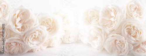 Obraz na płótnie Background of beautiful white  roses flowers .