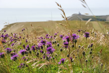 Beachy Head And The Seven Sist...