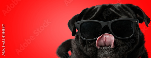 Fotografiet pug dog wearing sunglasses while licking nose