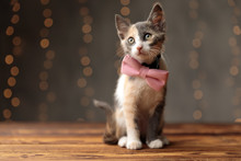 Metis Cat With Pink Bowtie Sit...