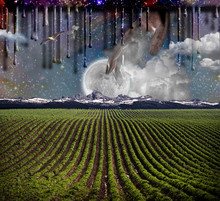 Surrealism. Field With Green R...