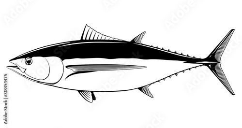 Albacore tuna fish in side view in black and white isolated illustration, realis Canvas Print