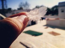 Close-Up Of Cropped Hand Holding Feather
