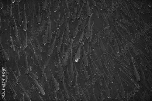 Fotografie, Obraz Full Frame Shot Of Fishes Swimming In Water