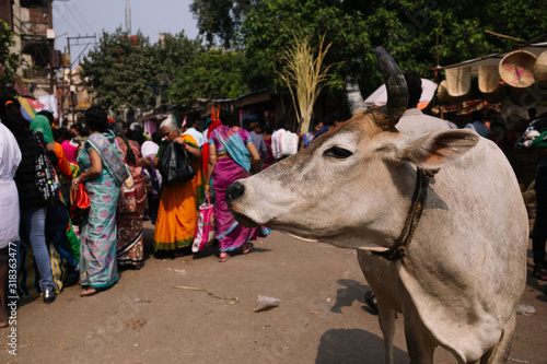 Cow Standing Against Crowd - fototapety na wymiar