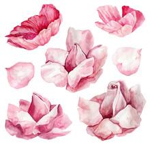 Set Of Pink Flowers. Botanical Watercolor Illustrations, Floral Elements, Anemones, Ranunculas, Roses.