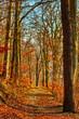 autumn walk forest path under warm sunlight