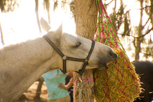 Close-Up Of Horse Eating Hay