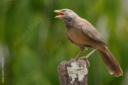 Photographie CLOSE-UP OF BIRD PERCHING ON STUMP