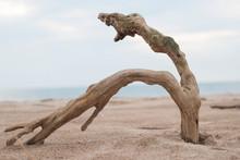 Driftwood In The Beach