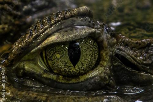 Canvas Print CLOSE-UP OF crocodile eye