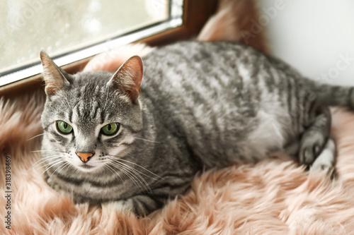 Fototapety, obrazy: Cute funny cat on window sill