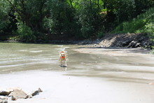 Süßer Hund Am Sandstrand