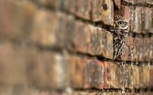 ALERT OWL HIDING OUTDOORS