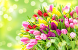 Fototapeta Tulipany - Tulip Flowers Fresh spring bouquet blurred bokeh background