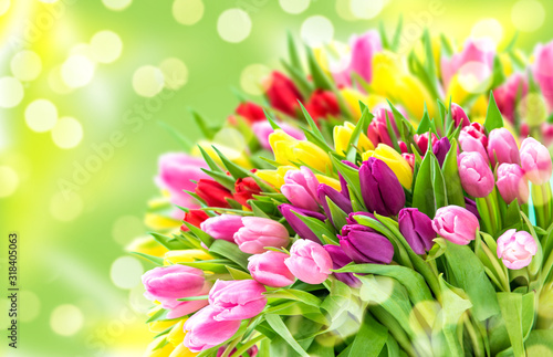 Tulip Flowers Fresh spring bouquet blurred bokeh background Wallpaper Mural