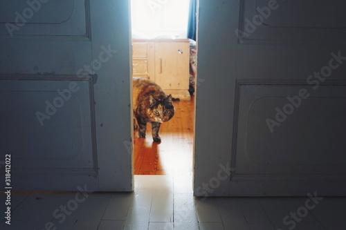 Billede på lærred Portrait Of Cat Seen Through Doorway