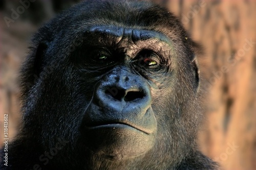 CLOSE-UP PORTRAIT OF MONKEY - fototapety na wymiar